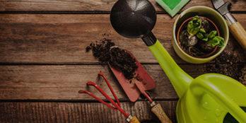 South Florida Gardening Tips
