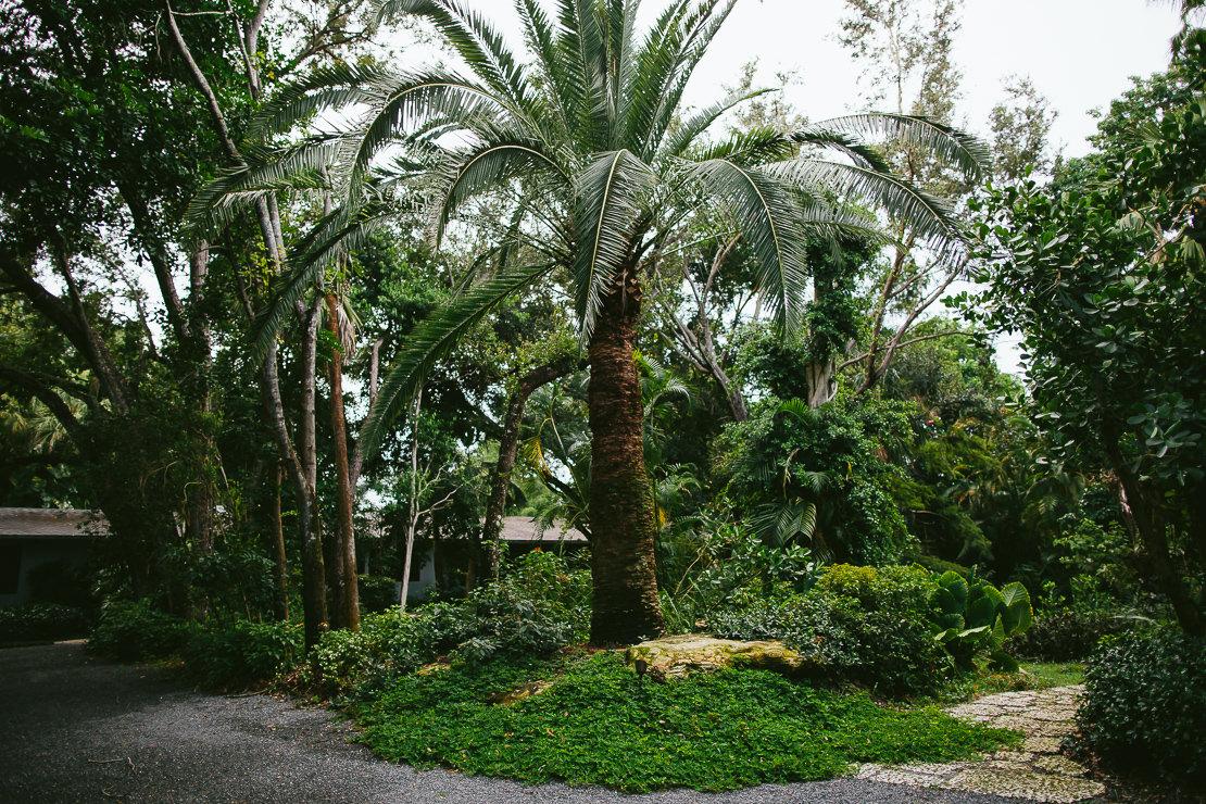 South Florida Rain Forest | ZITO LANDSCAPE DESIGN COMPANY