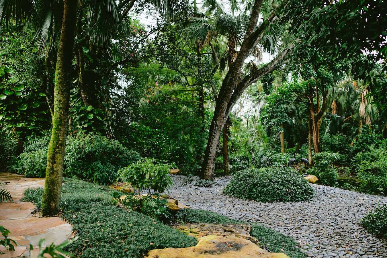 Tropical South Florida Landscape